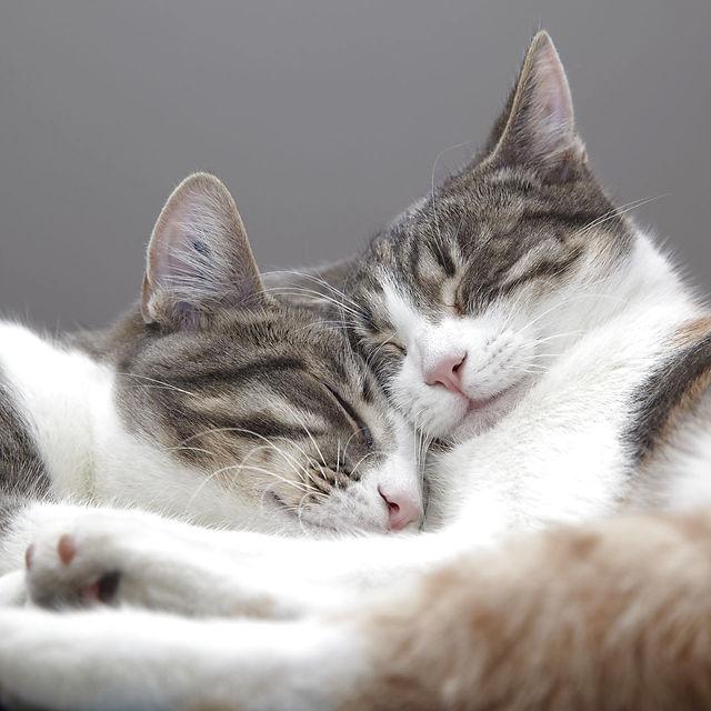 To katte sover tæt sammen