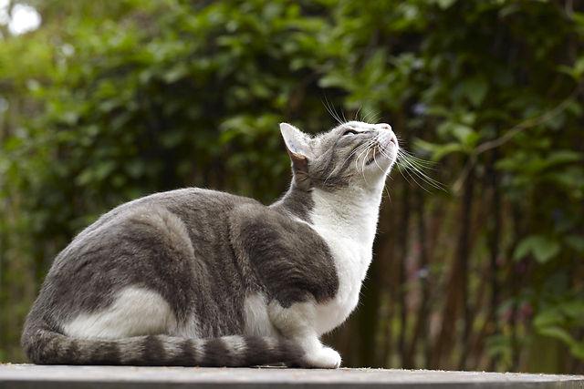 Tamkat kigger efter fugle der flyver forbi